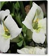 Snapdragon From The Mme Butterfly Mix Canvas Print