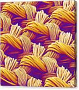 Woven Fabric, Sem Canvas Print