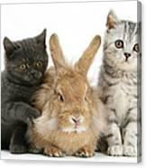 Kitten And Rabbit Canvas Print