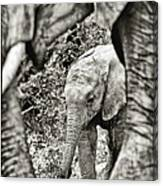 African Elephant In The Masai Mara Canvas Print
