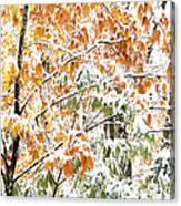 Autumn Snow Monongahela National Forest Canvas Print