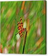 8- Dragonfly Canvas Print