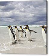 King Penguin Aptenodytes Patagonicus Canvas Print