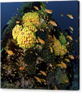 Reef Scene With Coral And Fish Canvas Print