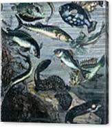 Verne: 20,000 Leagues Canvas Print