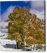 Rocky Mountain Fall Canvas Print