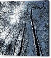 Epping Forest Trees Canvas Print