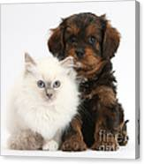 Kitten And Puppy Canvas Print
