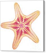 X-ray Of Starfish Canvas Print