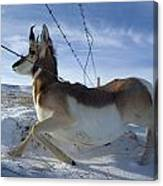 A Barbed Wire Fence Is An Obstacle Canvas Print