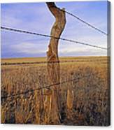 A Barbed Wire Fence Stretches Canvas Print