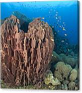 A Barrel Sponge Attached To A Reef Canvas Print