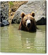 A Bear's Hot Tub Canvas Print