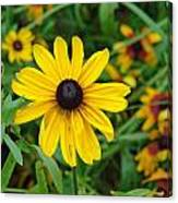 A Beautiful Close Up Of A Sunflower Canvas Print