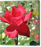 A Beautiful Red Flower Growing At Home Canvas Print
