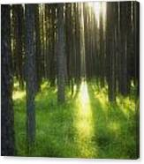 A Beautiful Wooded Area Canvas Print