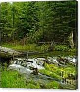 A Beaver Dam Spilling Over Canvas Print