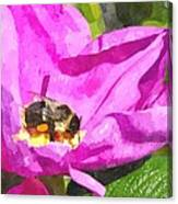 A Bee In A Rose Brpwc Canvas Print