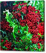 A Berry Merry Christmas Canvas Print