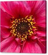 A Big Pink Flower Canvas Print