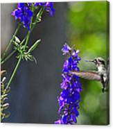 A Bird And A Bee Canvas Print