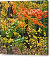 A Blustery Autumn Day Canvas Print