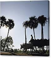 A Boy Rides On An Ox-drawn Cart Canvas Print