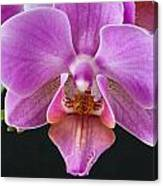 A Brilliant Orchid II Canvas Print
