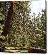 A Broken Tree Canvas Print