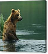 A Brown Bear Standing In Water Hunting Canvas Print