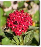 A Bunch Of Small Red Flowers Canvas Print