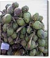 A Bunch Of Tender Coconuts Being Sold By A Vendor On The Street Canvas Print