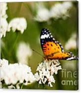 A Butterfly Affair Canvas Print