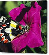 A Butterfly Lands On A Pink Flower Canvas Print