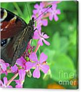 A Butterfly On The Pink Flower 2 Canvas Print