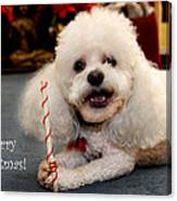 A Candycane For Puppy Canvas Print