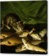 A Cat With Trout Perch And Carp On A Ledge Canvas Print