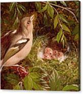 A Chaffinch At Its Nest Canvas Print