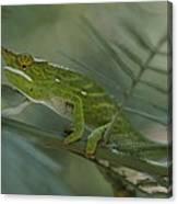 A Chameleon With Yellow Eyes Balances Canvas Print