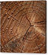 A Close Up Of Tree Rings Canvas Print