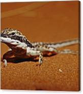 A Close View Of A Military Sand Dragon Canvas Print