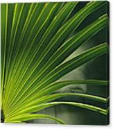 A Close View Of A Palm Frond Canvas Print