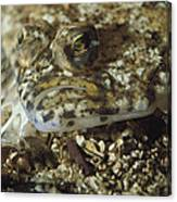 A Close View Of A Well-camouflaged Canvas Print