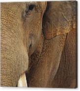 A Close View Of The Face Of An Canvas Print