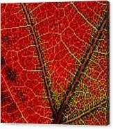 A Close View Of The Veins Of A Colorful Canvas Print