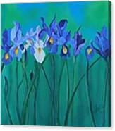 A Clutch Of Irises Canvas Print