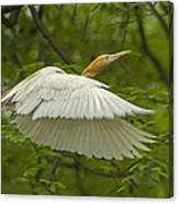 A Day With Egrets Canvas Print