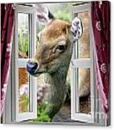 A Deer Enters The House Window. Canvas Print