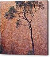 A Desert Bloodwood Tree Against The Red Canvas Print