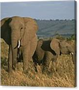 A Female Elephant With Her Baby Canvas Print